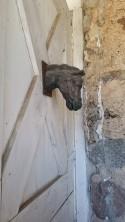 Bronze horse on barn door 'At The Farm', Waconia, MN, minnesota, country, farm, cottage, rustic, eroseco