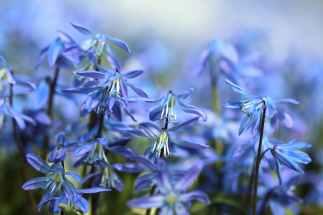 purple blue flowers wildflowers botanical #eroseco