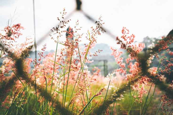 chain, fence, links, flowers, meadow, field, wonder, wander, daydream, discovery, eroseco