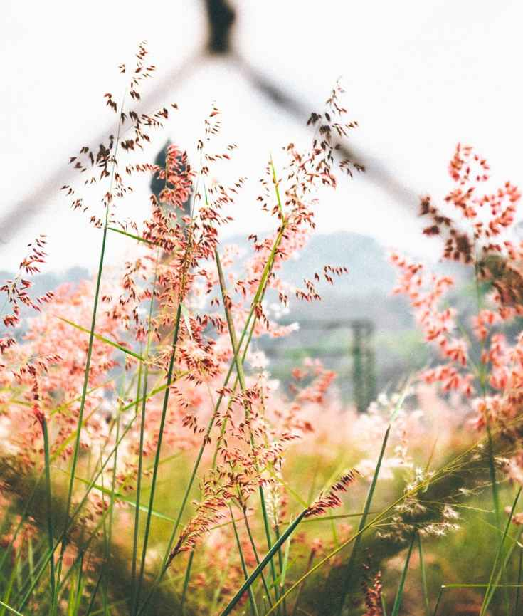 chain, fence, links, flowers, meadow, field, wonder, wander, daydream, discovery, eroseco